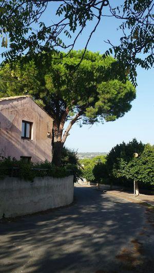 Capo Vaticano Italian Holiday Hugging A Tree Light And Shaddow Mediterranian Houses Street View