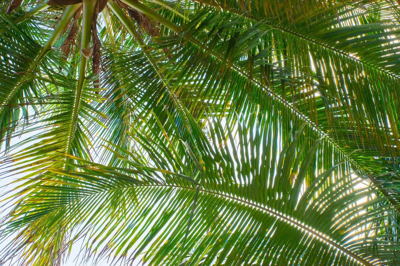 palmtree Green Leafs Leafes Nature Palm Palm Leaf Palm Tree Palm Trees Structure Tree Structures