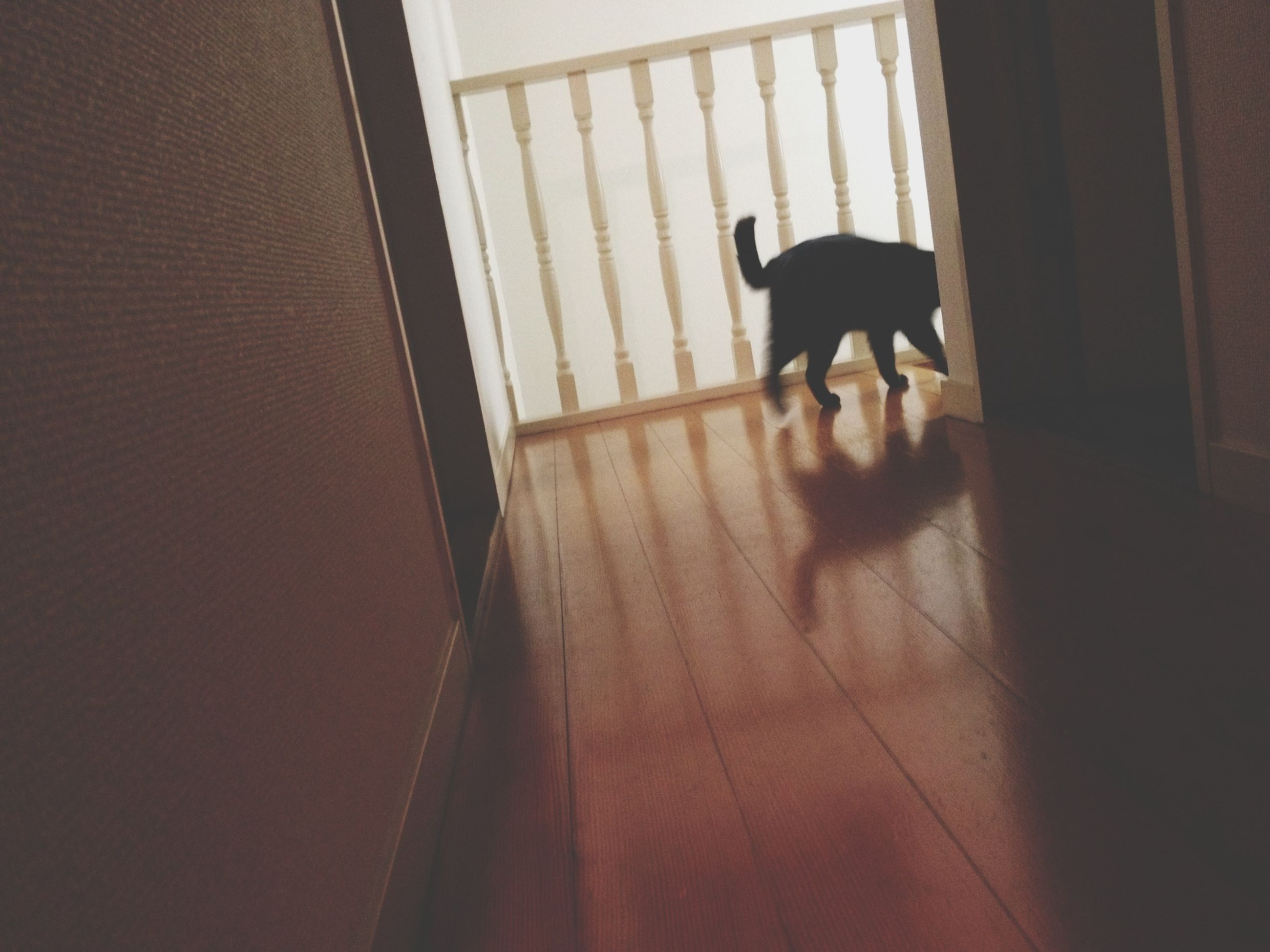 indoors, window, architecture, built structure, pets, home interior, flooring, full length, shadow, domestic animals, tiled floor, one animal, door, walking, animal themes, dog, wall - building feature, sunlight