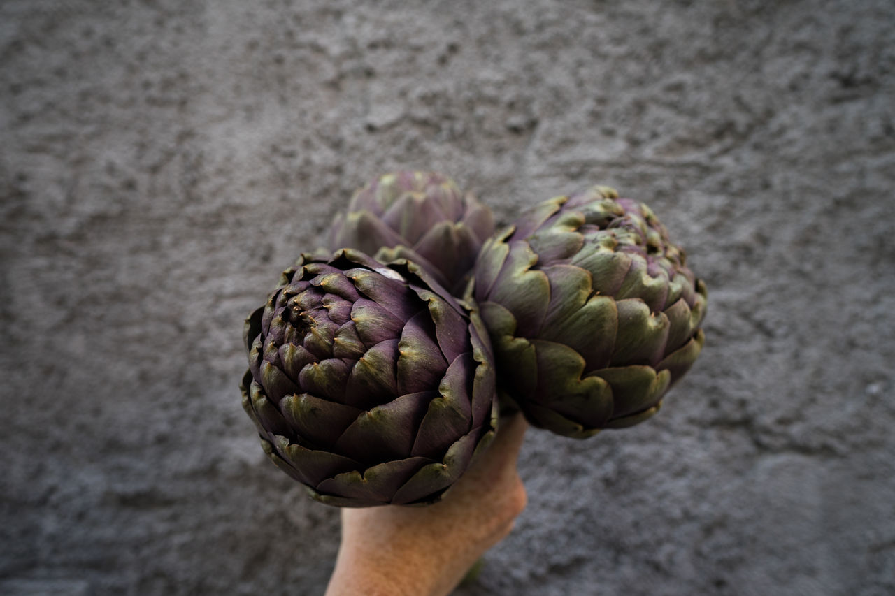 ARTISCHOCKEN Artichoke Artischocken Close-up Constantinschiller Food Freshness Healthy Eating Herrschiller Holding Human Body Part Human Hand Lugano Nature Vegetable