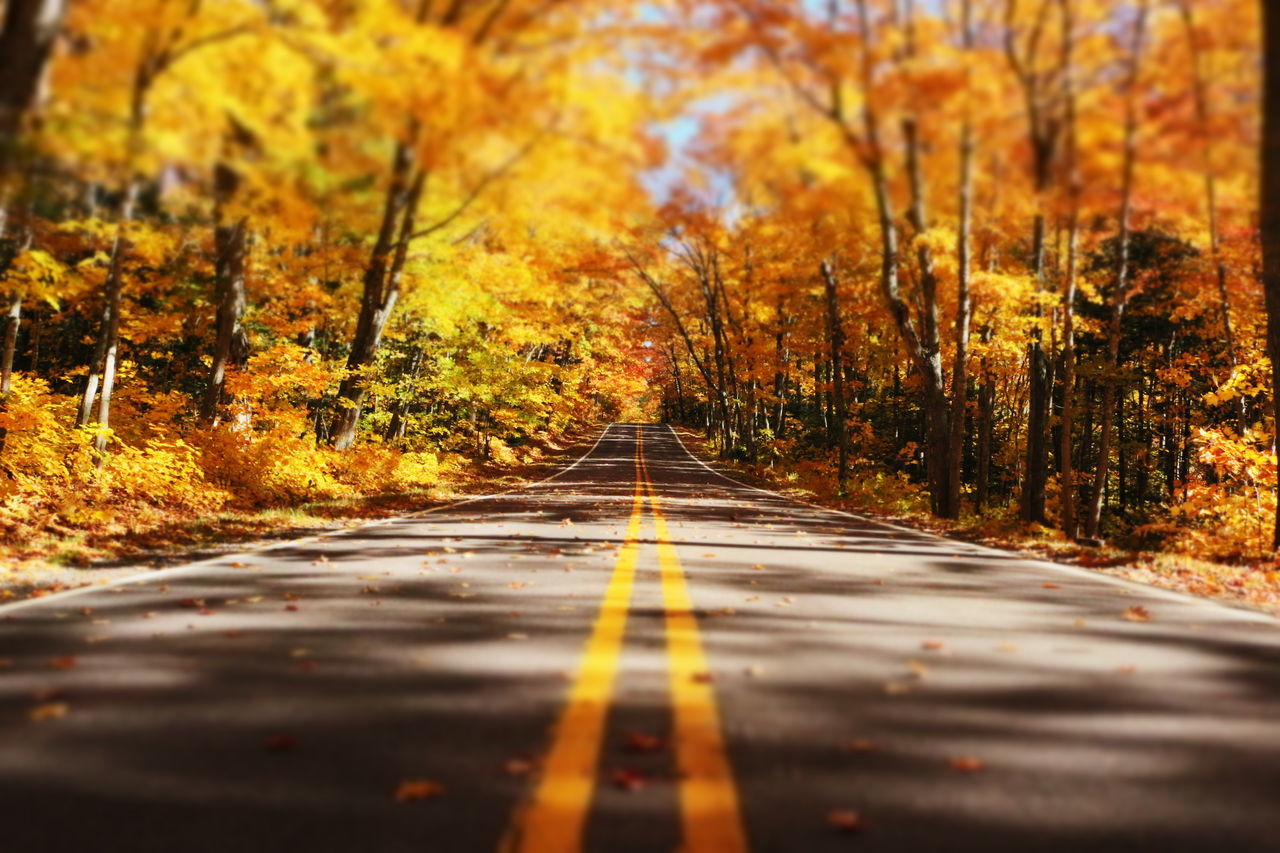 'Tunnel of Color' Autumn Autumn Colors Autumn Leaves Change Colors Of Autumn Fall Fall Beauty Fall Colors Fall Leaves Fall Season Great Outdoors Michigan Mothernature Nature Orange Outdoors Roads Rural Scenes Season  Trees Up North Upper Peninsula Yellow