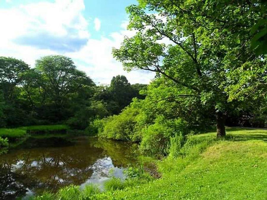 Summer ☀ Bright Green Pond Massachusetts Still Water