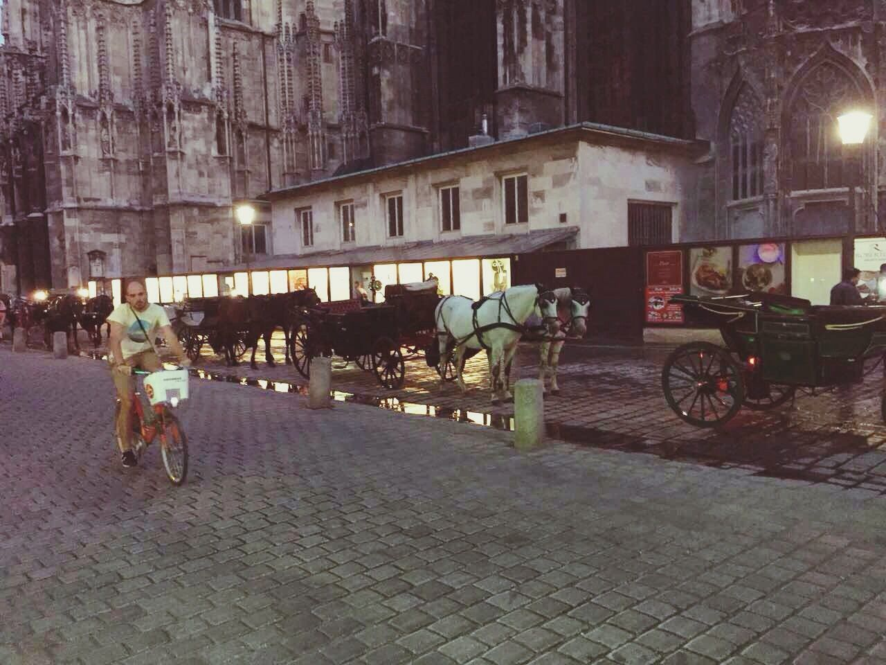 Horses Street Sity View Street View Street Photography Buildings Architecture Platz Horses Attraction People Carriage