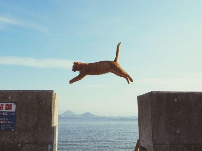 飛ぶ猫 Cat Sea Ocean Sea And Sky Jamp Jamp! Animal