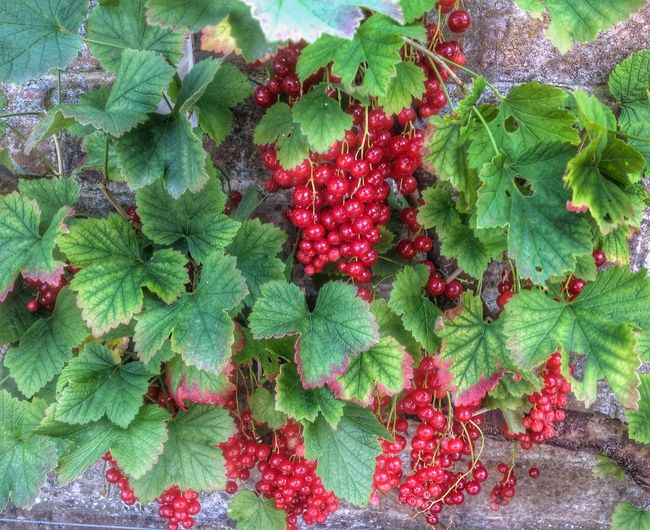 Autumn's Coming The Fruits Of Our Labour Garden Photography nature's jewels!