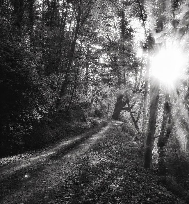 Little road on the way to work Sunbeam Sunlight Tranquility Tranquil Scene Bright Monochrome Beautyeverywhere Simplicity Black And White Photography Blackandwhite Black And White Light And Shadow Good Morning Blackandwhite Photography On The Way To Work Sunny Day Shadows And Light