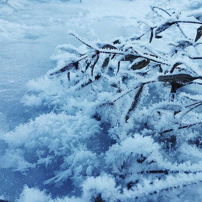 @AppLetstag зима снег Snow холод Природа холодно январь лед красота мороз Nature Winter Cold Ice Beautiful Weather Trees Freezing Mobilephotography Vscocam VSCO Macro Samsung Youmobile Vscogrid vscogood vscogram vscodaily vscophile vscobest