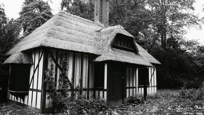 House Architecture Built Structure Building Exterior Old Residential Structure Tree Window Abandoned Wood - Material Damaged Tree Trunk Obsolete Weathered Exterior Outdoors Deterioration Cottage Day Discarded Black And White Photography Black & White Black And White Building Cabin