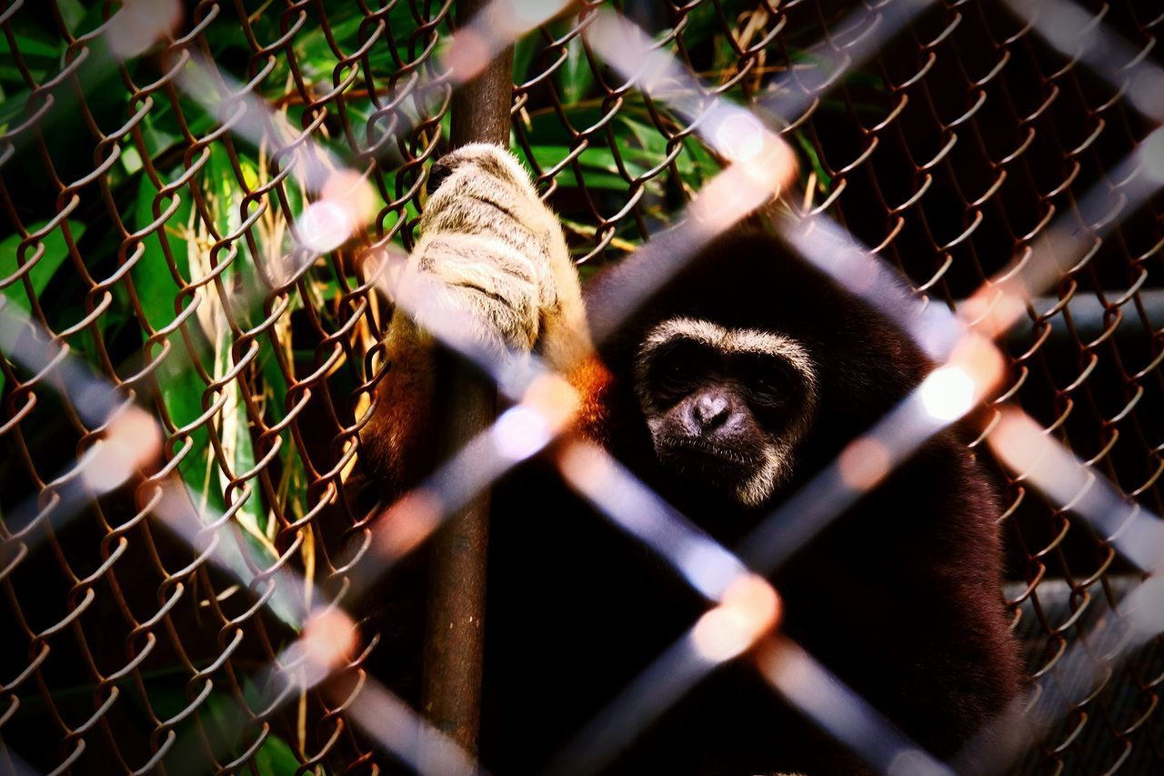 Planet of the Ape. Close-up ZooLife Zoo Animals  Outdoors Travel Zoophotography Mongkey