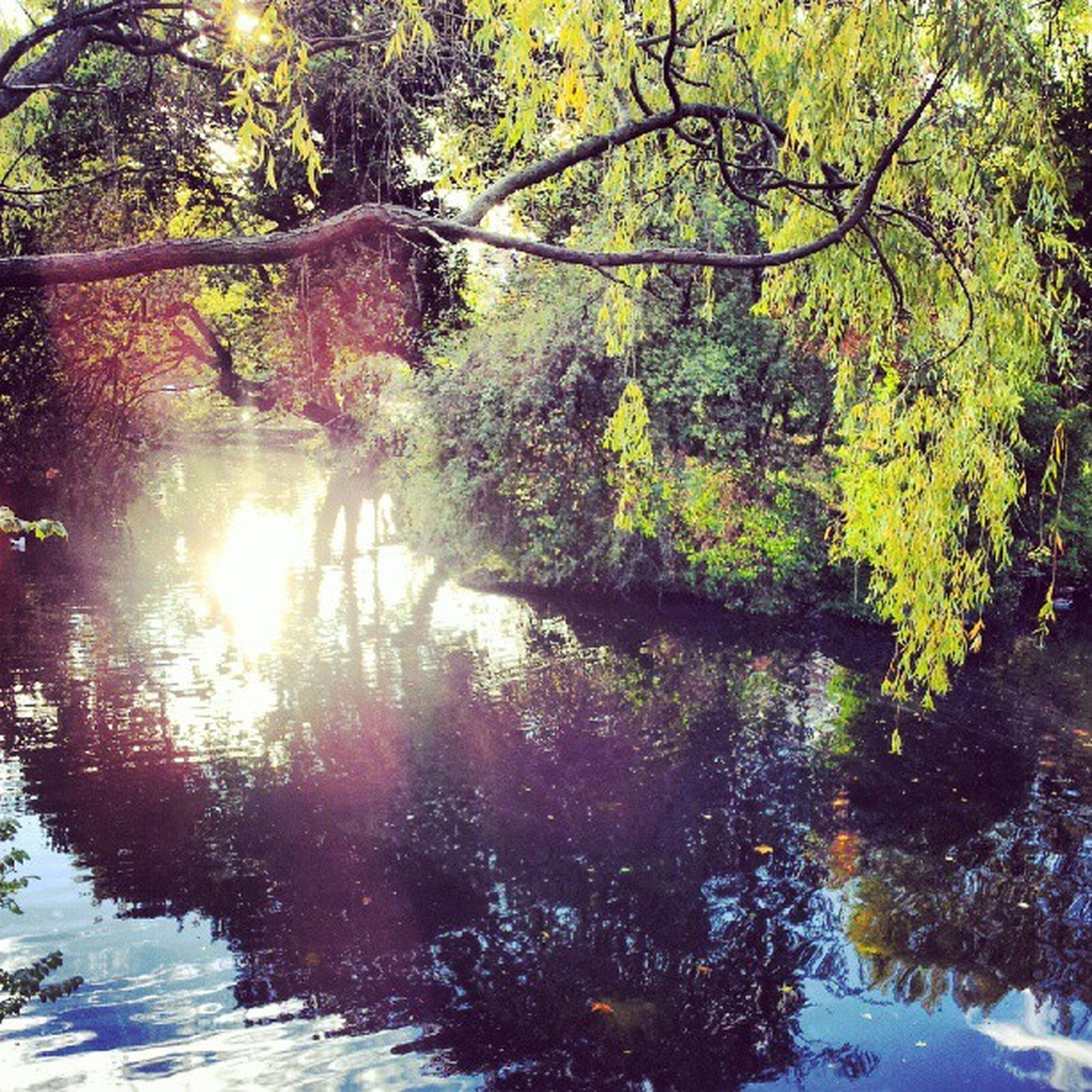 tree, tranquility, sun, branch, beauty in nature, sunlight, water, reflection, growth, tranquil scene, nature, scenics, forest, lake, sunbeam, lens flare, waterfront, river, idyllic, no people