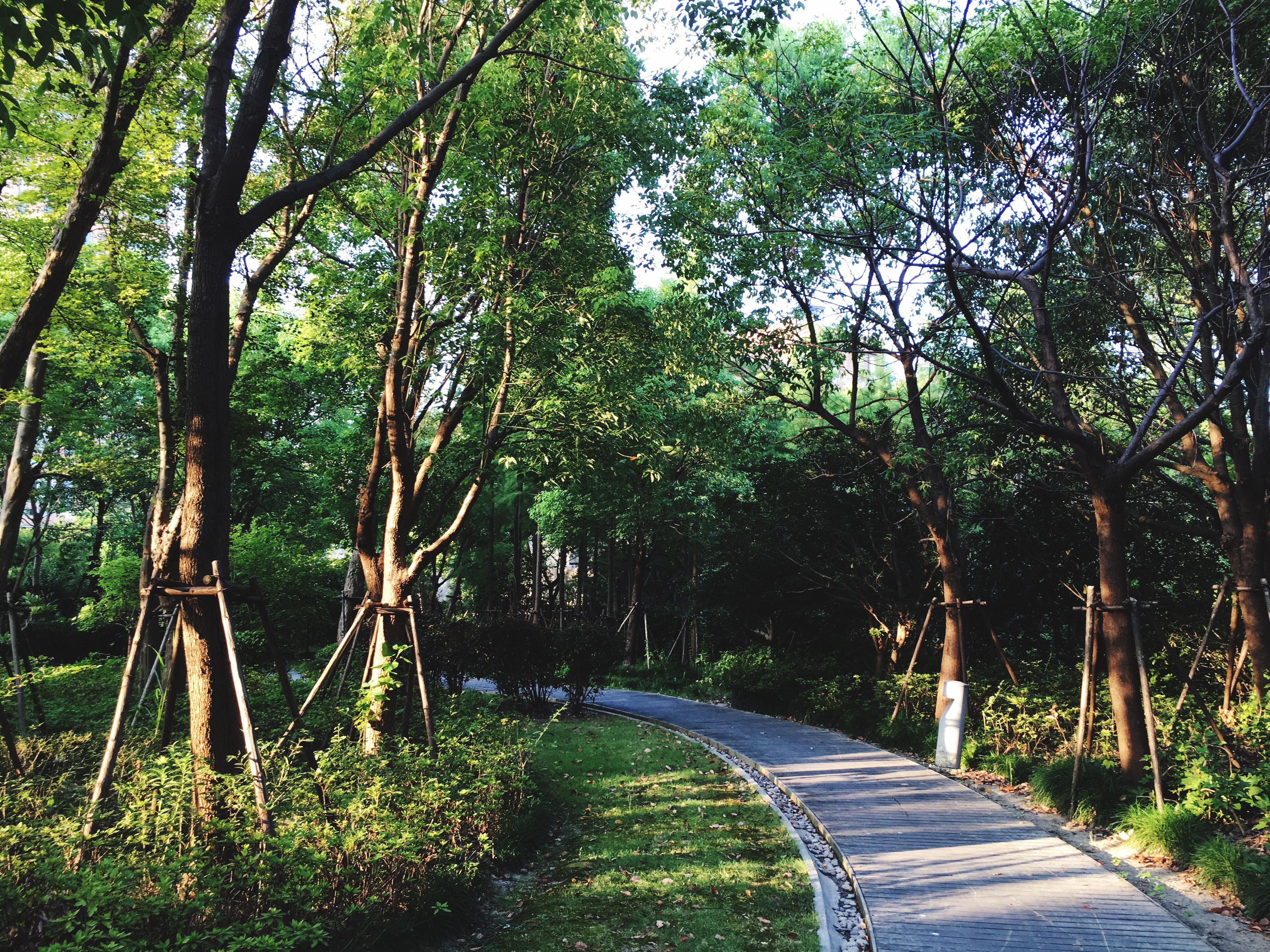 tree, the way forward, tranquil scene, forest, tranquility, tree trunk, long, growth, scenics, empty, nature, diminishing perspective, beauty in nature, woodland, non-urban scene, narrow, green color, lush foliage, solitude, empty road, day, green, outdoors, curve, tall - high, vanishing point, treelined, tourism, greenery, remote