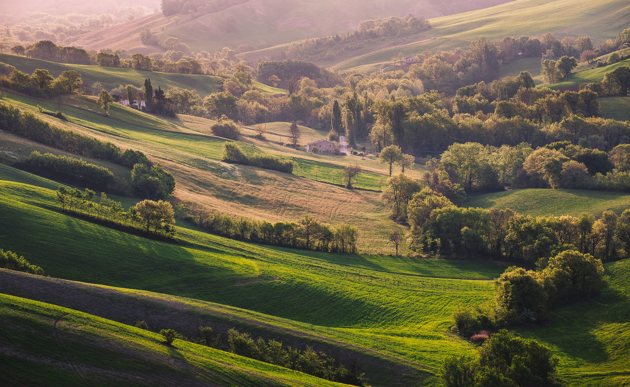 Agriculture Beauty In Nature Day Field Grass Green Color Landscape Nature No People Outdoors Rural Scene Scenics Tranquil Scene Tranquility Tree