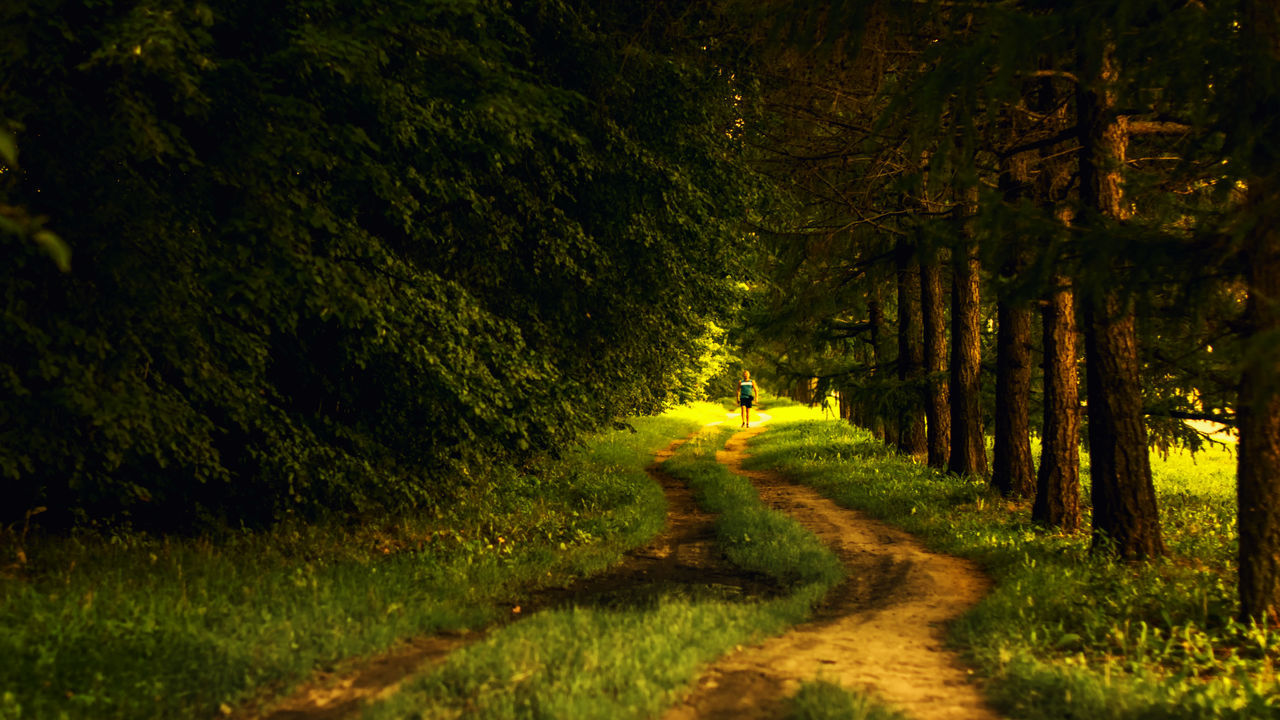 Man Walking On Dirt Road Amidst Trees In Forest