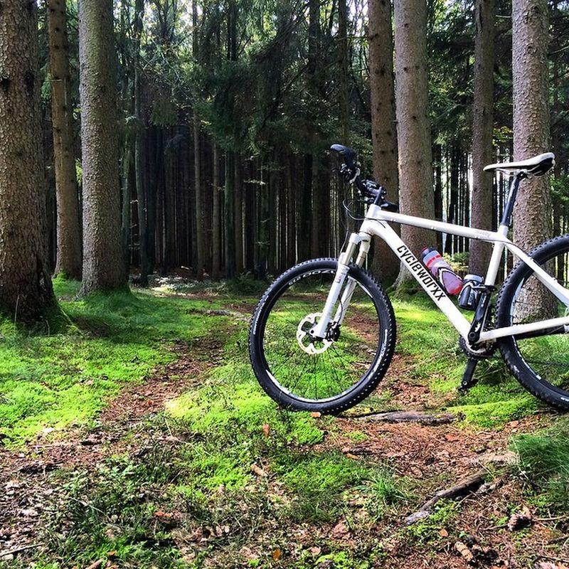 MTB Mountainbike Natur Nature Fahrrad Forrest White Bayern Hardtail 650b