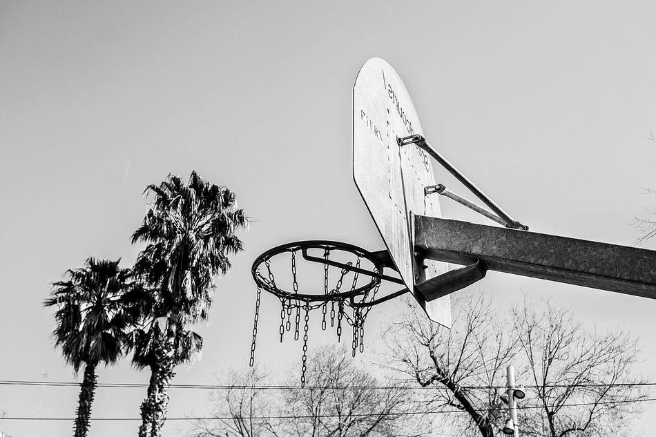 Beautiful stock photos of palm tree, Absence, Basketball - Sport, Basketball Hoop, Clear Sky