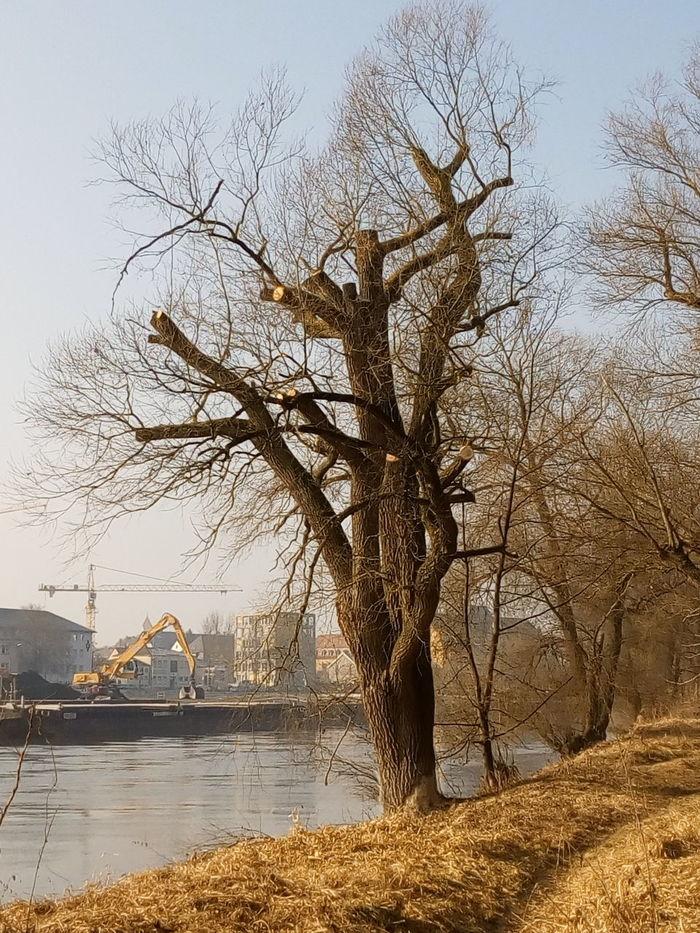 Tree Baumpflege Seilklettertechnik Nature Flussufer Bqaquaris Bq