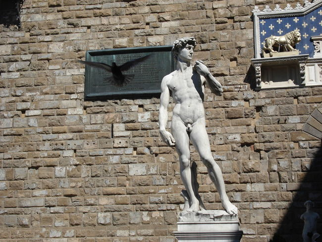 Art Bird Day Florence Italy Historical Italy Renessans Sculpture Statue Statue Of David Statue, Statue's, David, Florence