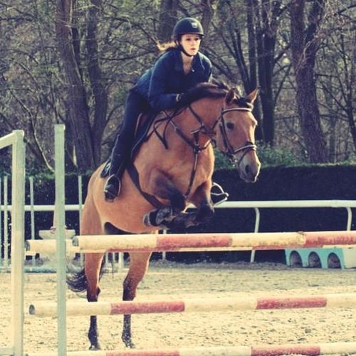 Mutine de Morlay & I Horse <3 Horses Horse Crazy