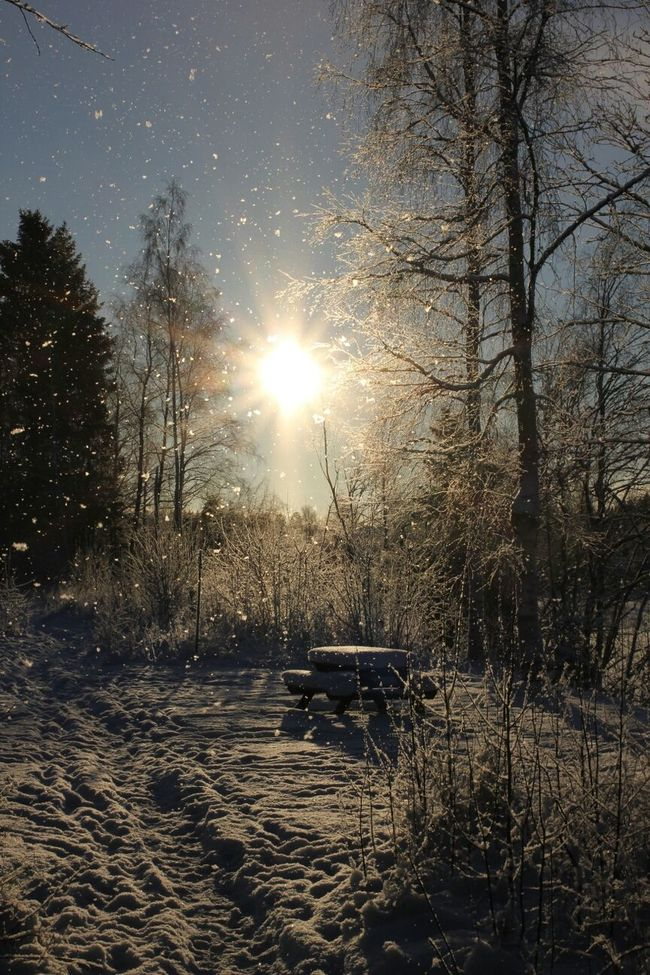 Sunny and cold January day in Umeå Sun_collection Nature_collection Eye4enchanting MADE IN SWEDEN