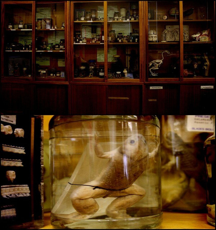 Science Jars  Frog Oldschool oldsch