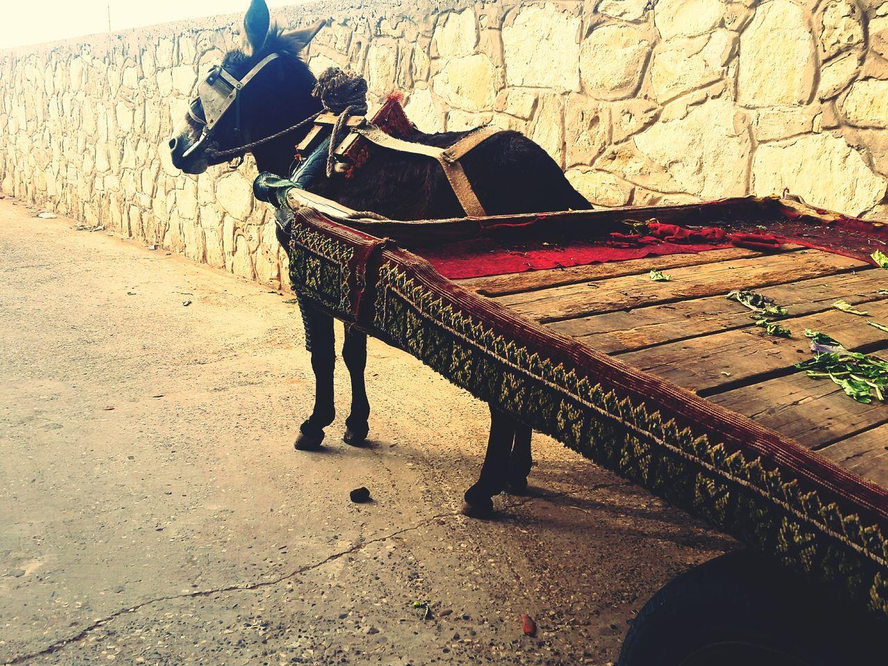 Morocco 🇲🇦 مسجد Donkey Samsung Galaxy S5 Samsungphotography Agadir Morocco Wallpaper Pets One Animal Animal Themes Domestic Animals Traditional Marketplace