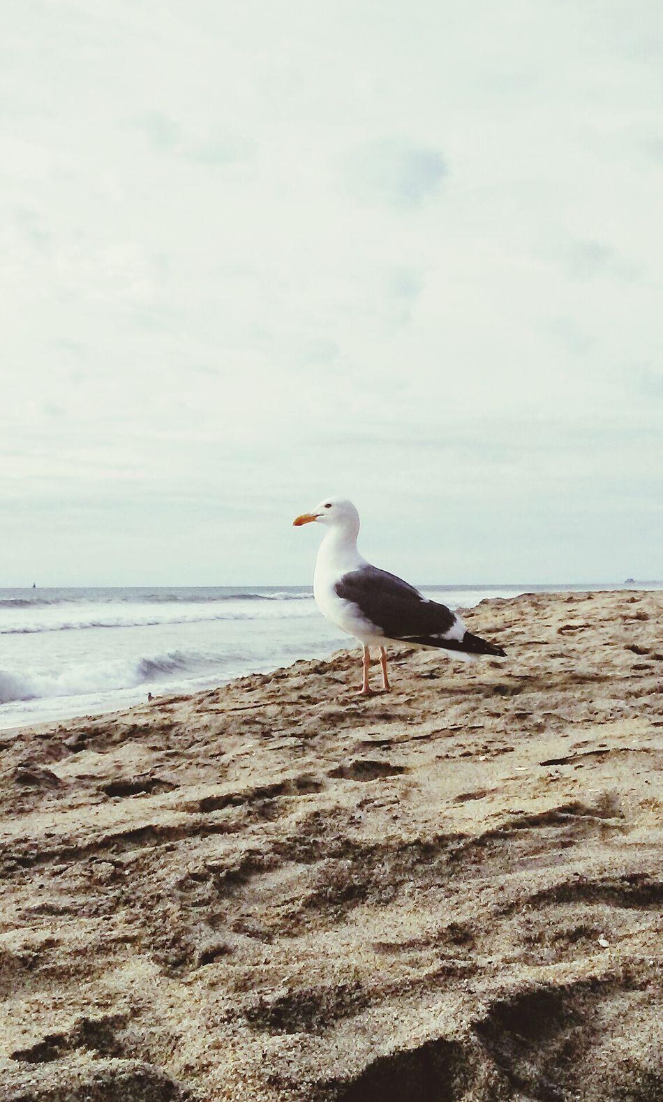 Taking Photos Enjoying Life Sky And Clouds Carlsbad Beach Sand Ocean Beach Photography Seagull Beach Chicken