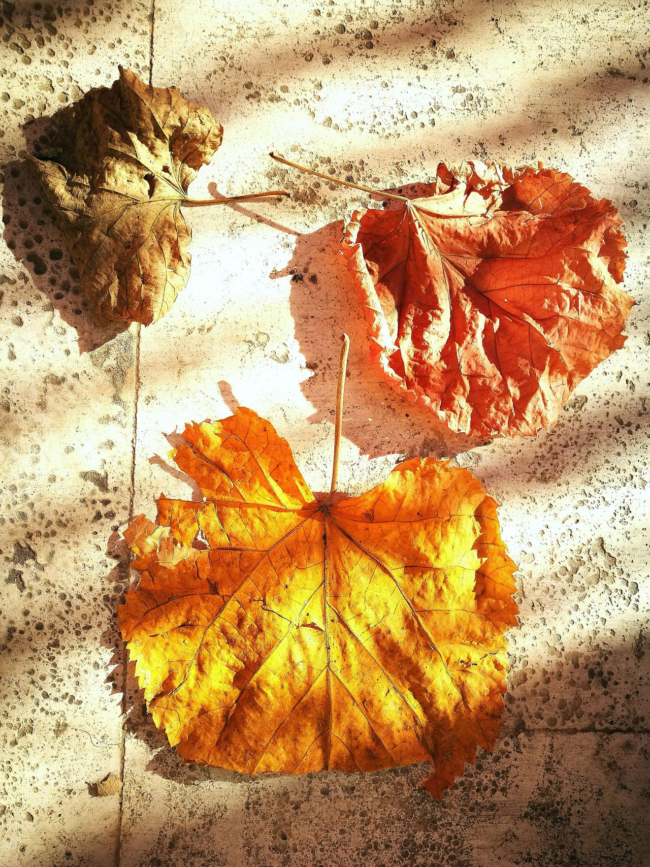 Color No People Outdoors Colors Yellow Red Green Casualphotography Strange Things Found This Way Autumn Autumn Colors