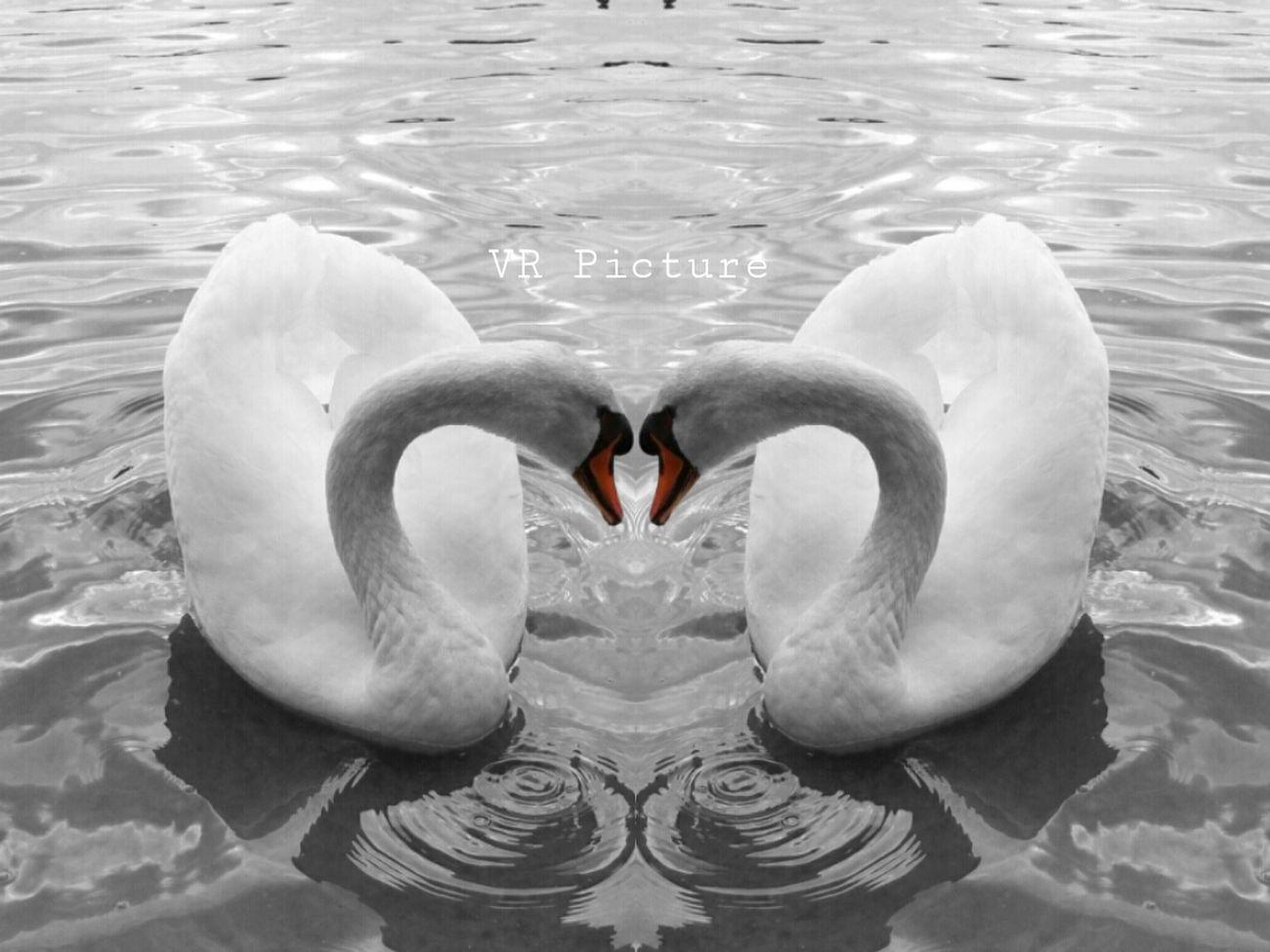 Simplicity Swan Eye4photography  Eye Best Shot
