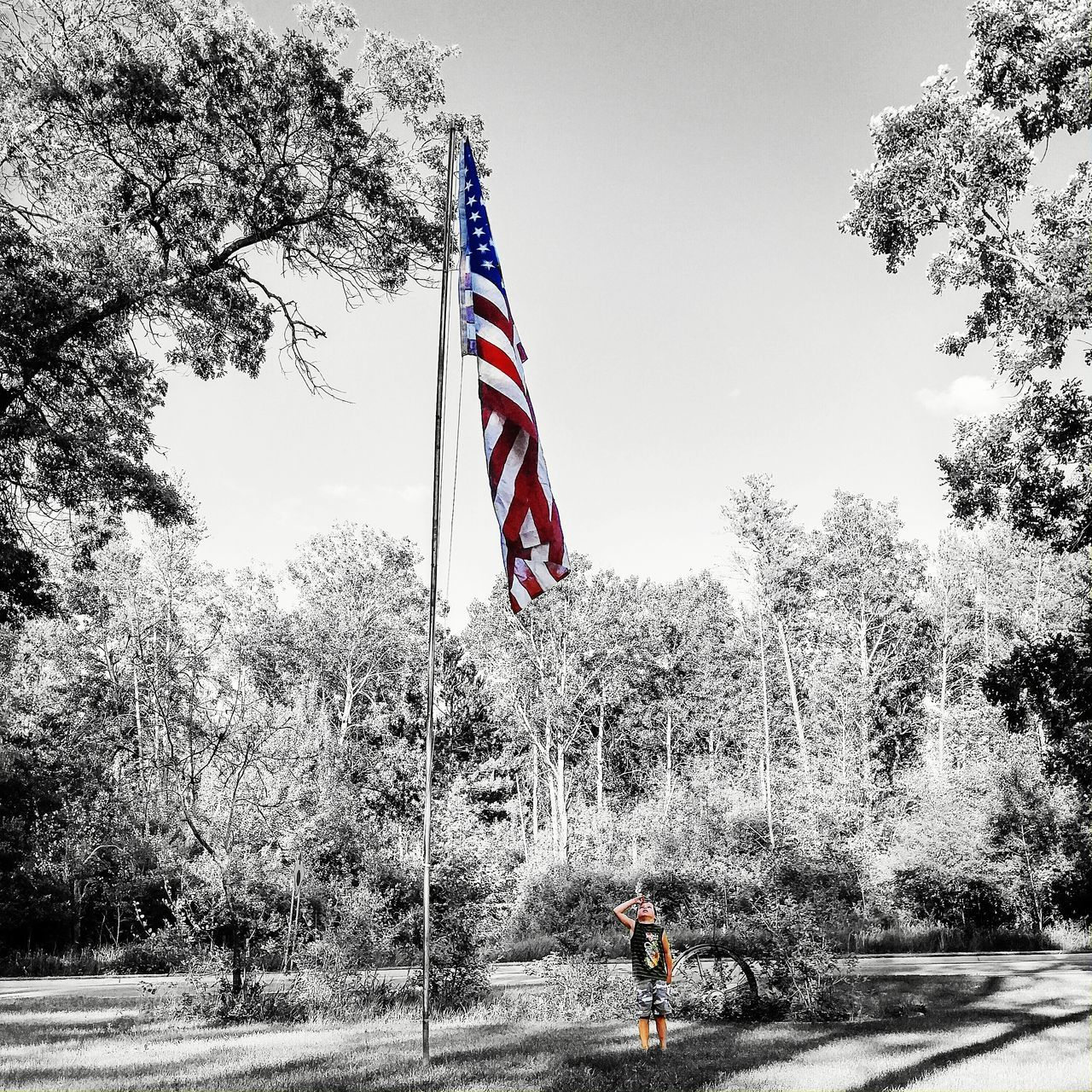 patriotism, flag, tree, stars and stripes, day, real people, outdoors, pride, men, nature, sky, one person