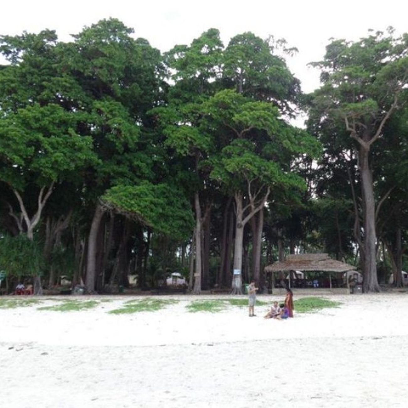 Radhanagar Beach, Havelock Island. Andamanislands , India , Trees , Beach , Instahub , Whitesand , Naturelover , Nature , Naturephotographs .