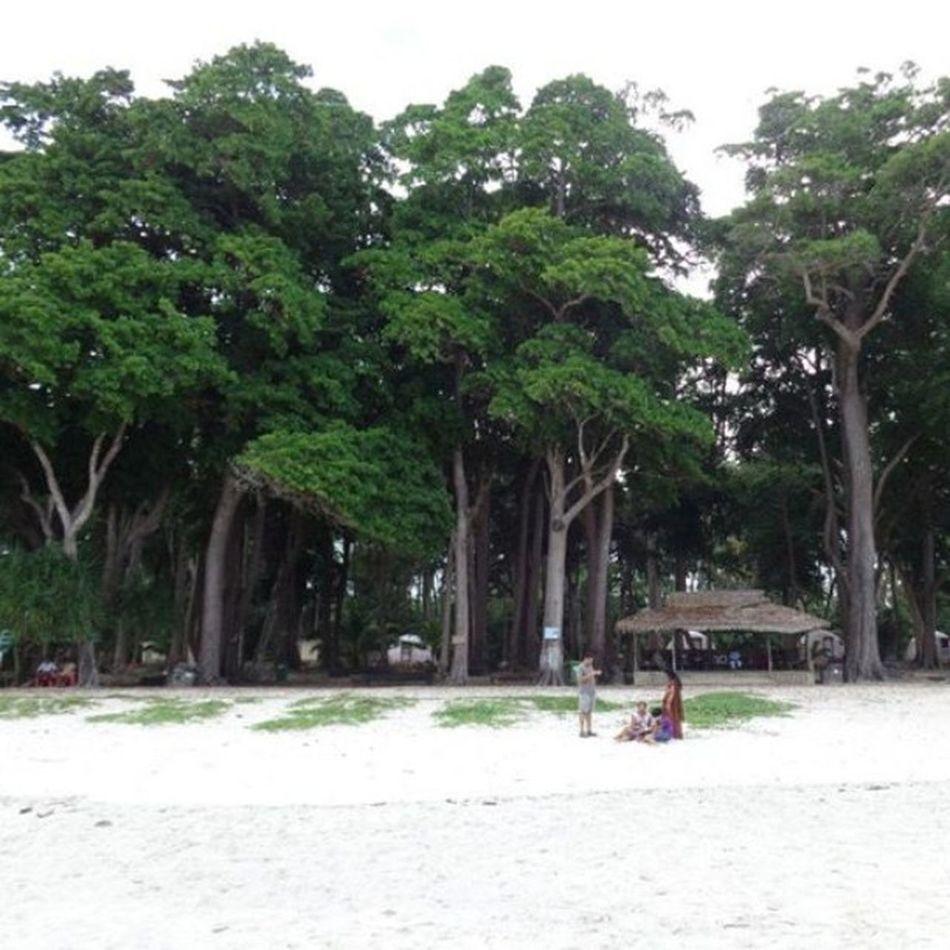 Radhanagar Beach, Havelock Island. Andamanislands , India , Trees , Beach , Instahub , Whitesand , Naturelover , Nature , Naturephotographs .