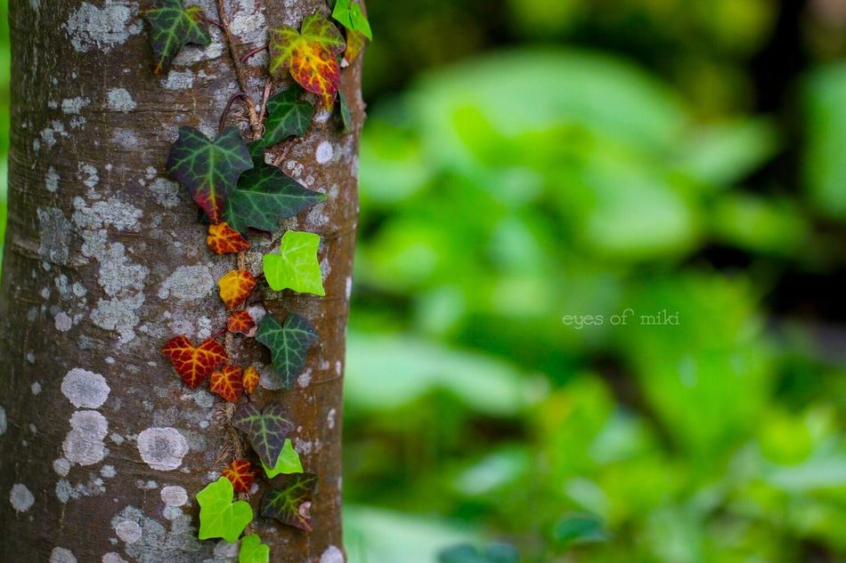 http://youtu.be/L46IEE46jvU Japan EyeEmJapan Nature Eye Em Nature Lover Park Design Photo Personality  Life イロトリドリ