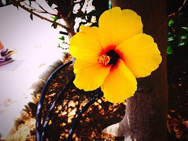 Flower Taking Photos Enjoying Life Nature Nature Photography Nature On Your Doorstep Fuerteventura