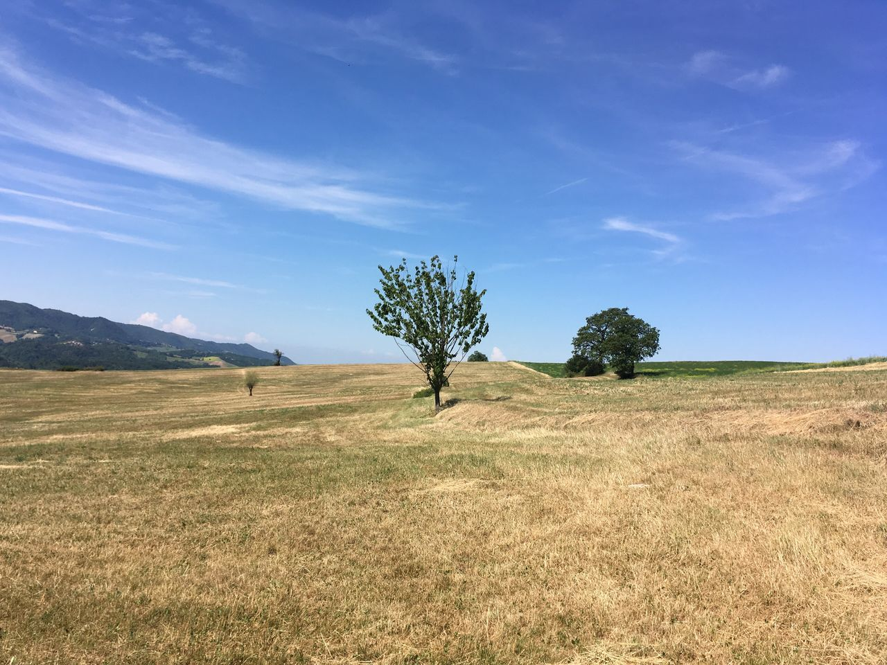 Trees On Field Against Blue Sky