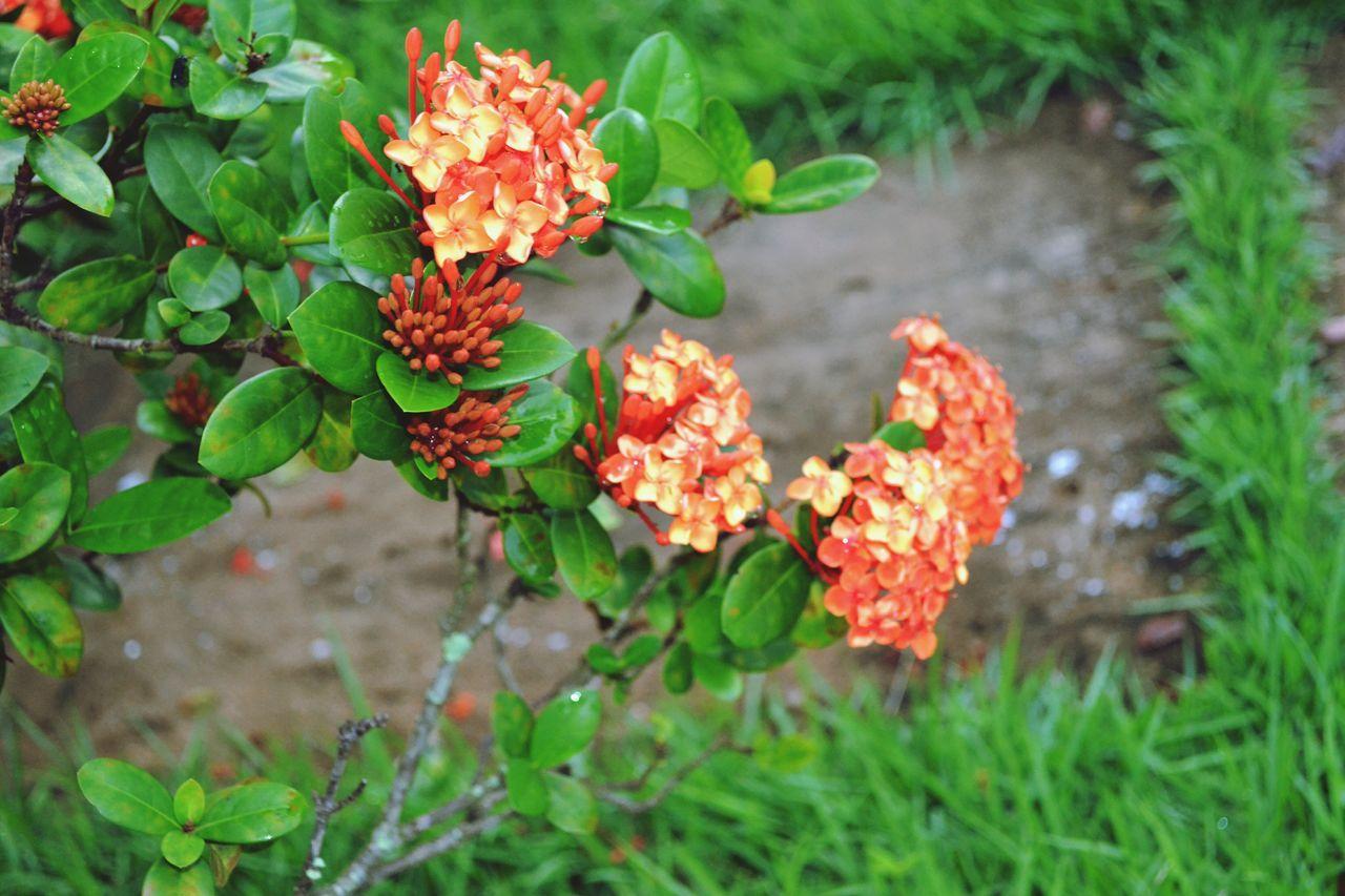 Close Up Of Orange Blossoms