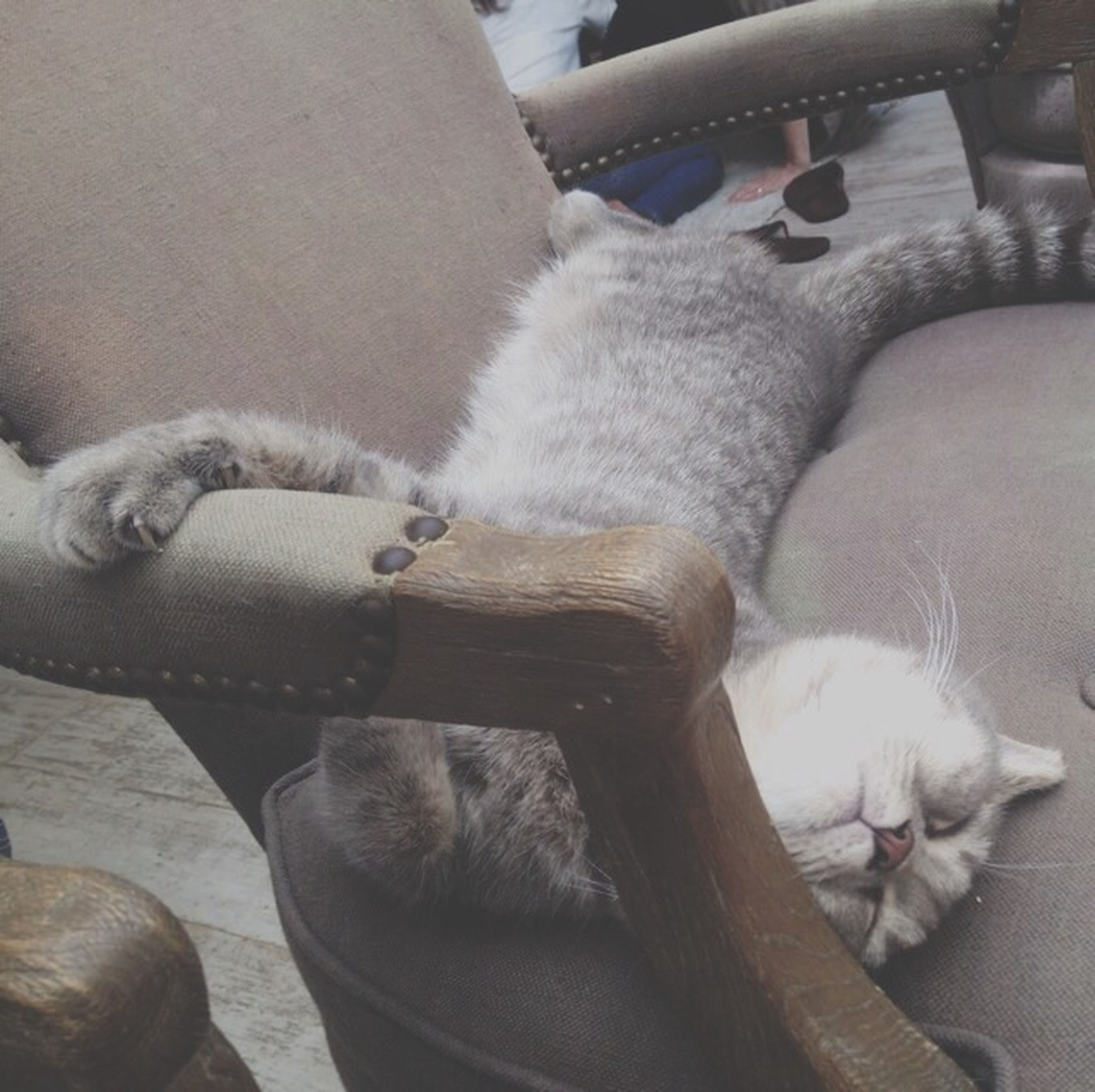 animal themes, indoors, domestic animals, one animal, pets, domestic cat, mammal, relaxation, cat, resting, sleeping, lying down, high angle view, feline, home interior, close-up, toy, sitting, sofa, no people