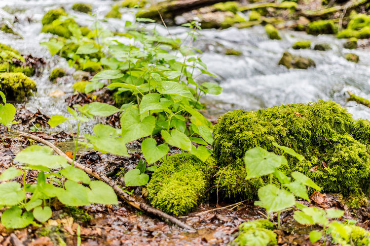 Fresh Green Color Growth Nature Plant Plants And Flowers Plants And Water Plants Found In Rivers And Streams Plants That Live In Rivers Water Water Flow Water Flowing
