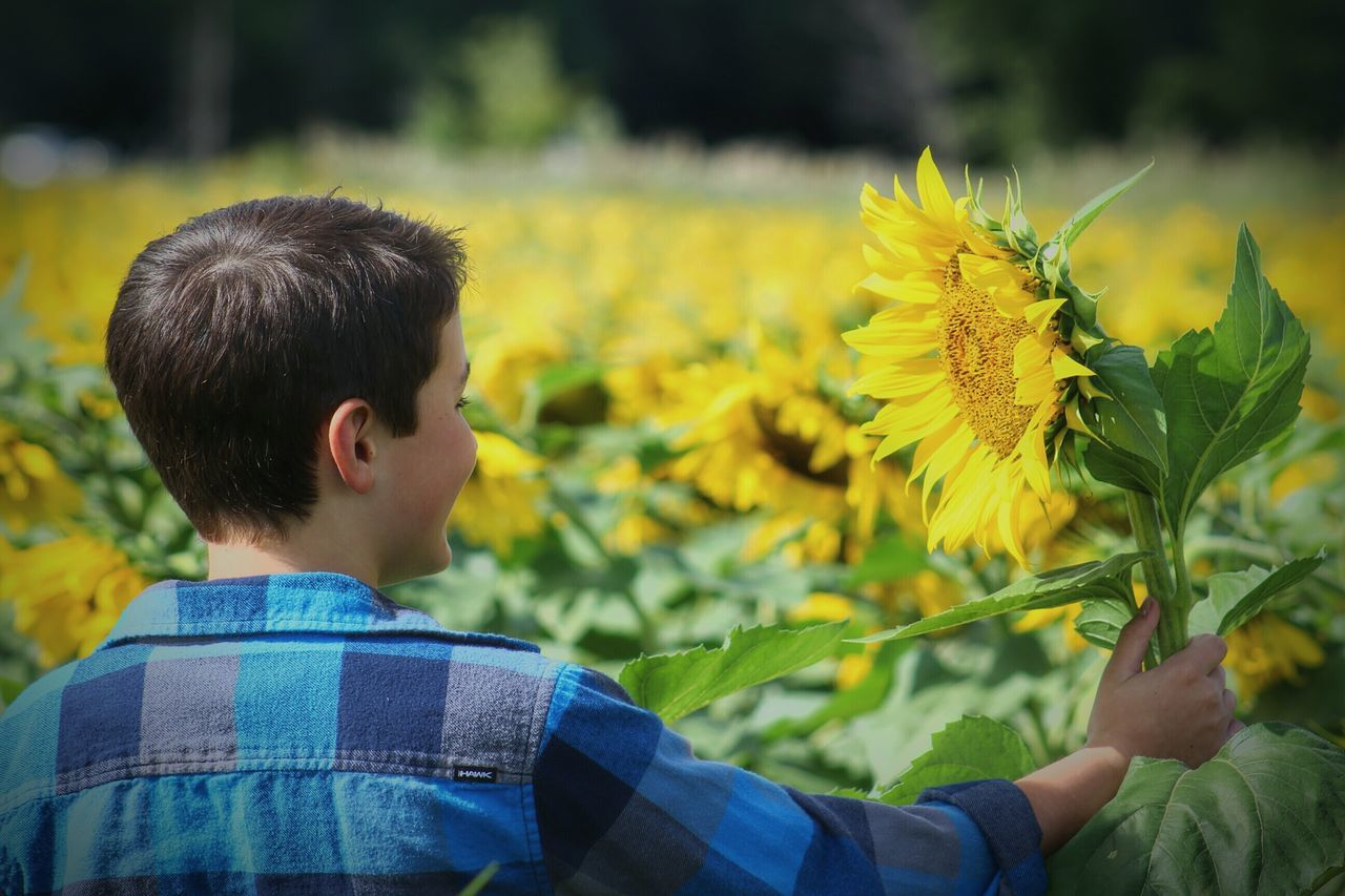 Beautiful stock photos of sunflower,  10-11 Years,  Agriculture,  Beauty In Nature,  Botany
