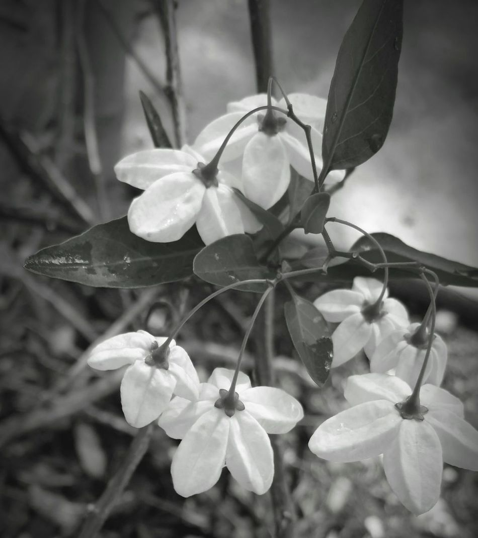 Q Quaint Perspective Black & White Black And White Photography Beauty In Nature Dainty Flowers_collection Simple Beauty Simple Photography Enjoying Life Showcase March Nature Photography Tranquil This Week On Eyeem Tranquil Scene Atmospheric Mood Nature_collection Quiet Simplicity Nature Design Perspective