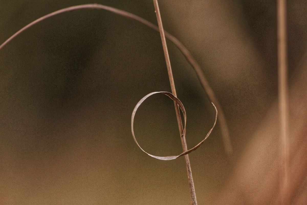 The future of spirals past Beauty In Nature Shallow Depth Of Field Small Is Big Minimalist