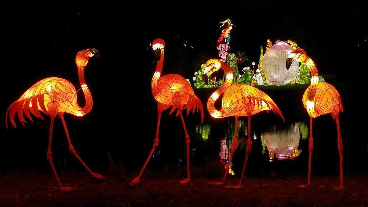 Cities At Night Magical Lanterns Lantern Show Flamingo Lanterns Life Of Lanterns Lanterns Life Learn & Shoot: After Dark Lantern Festival Lantern Festival London Flamingoes Flamingo Lake Flamingo Gardens Light In The Darkness Lantern Exhibition Light Up Your Life Flamingo Art Lanterns In The Dark Reflection Obsession Neon Lights