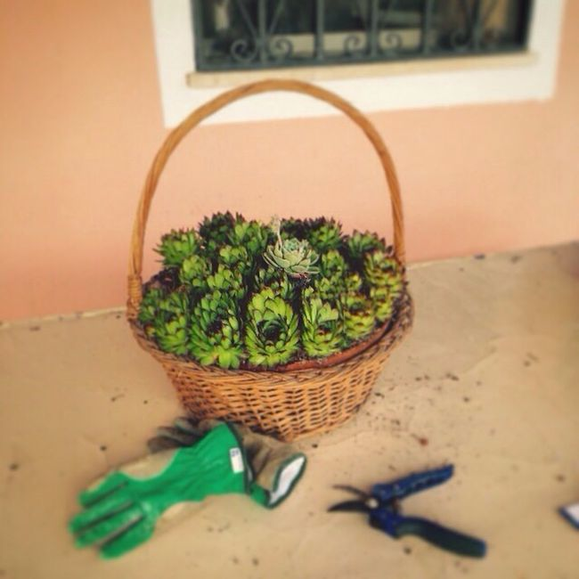 Gardening Olevano Romano Countryside
