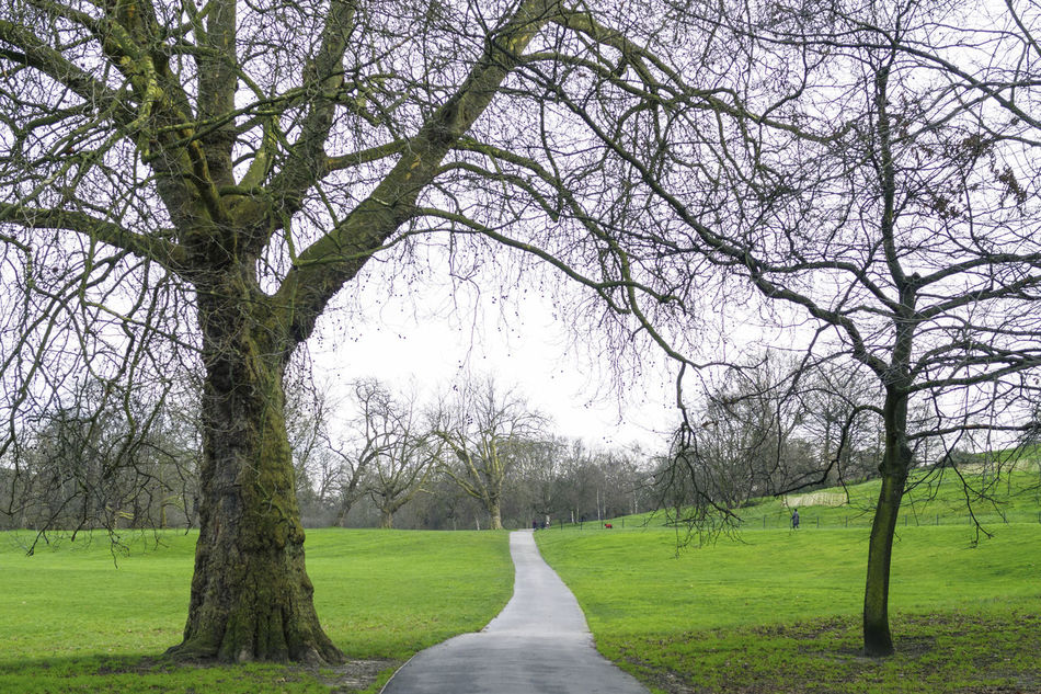 Beauty In Nature Day Grass Green Color Growth Landscape Nature No People Outdoors Path Pavement Scenics Tranquility Tree