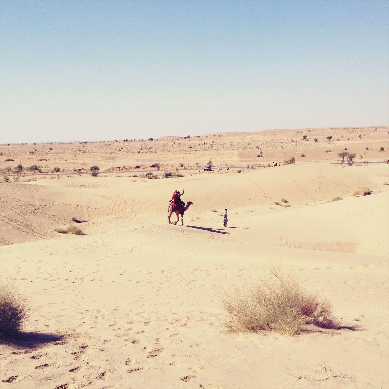 Beautiful stock photos of desert, Animal Themes, Arid, Brown, Camel