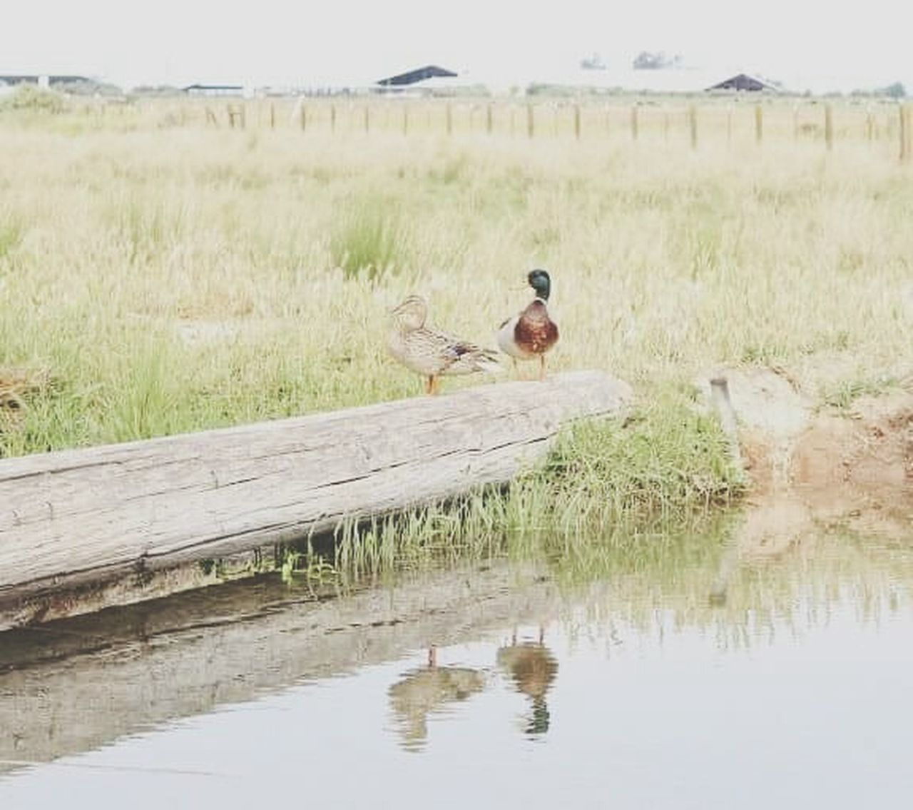 one animal, water, reflection, outdoors, day, animal wildlife, animal themes, animals in the wild, nature, grass, no people, bird, pets, mammal, sky
