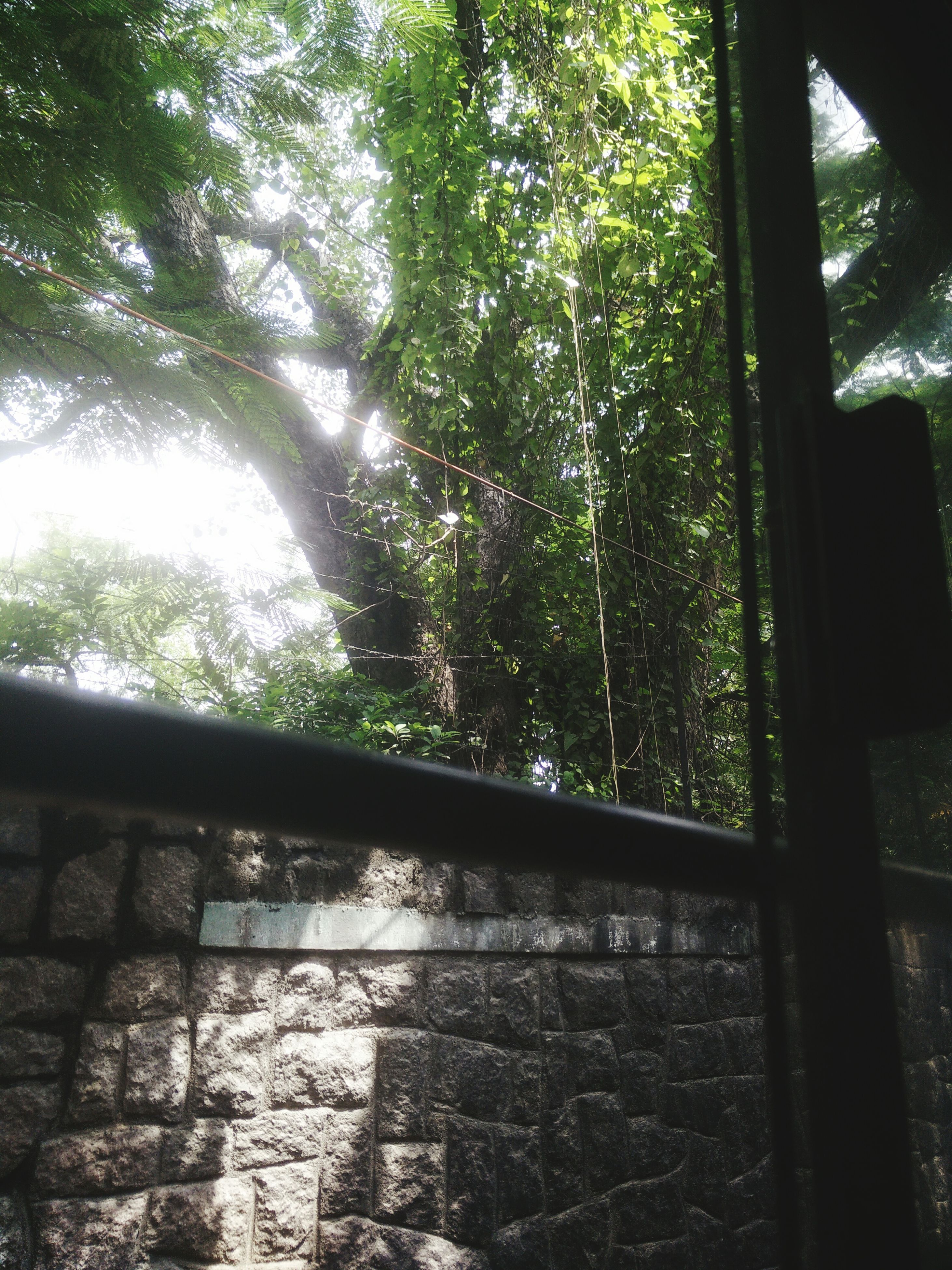 tree, window, indoors, glass - material, built structure, growth, transparent, architecture, day, low angle view, sunlight, no people, metal, branch, closed, house, pattern, tree trunk, close-up, nature