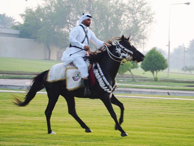 Taking Photos Doha Qatar Arabian Horse Cavalry Doha Corniche Dohalife