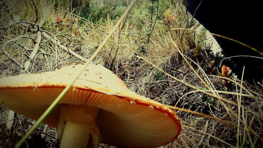 Benditos hongos!!! Fungi Setas Zetas Hongos  Frutos Del Prado Frutosilvestres