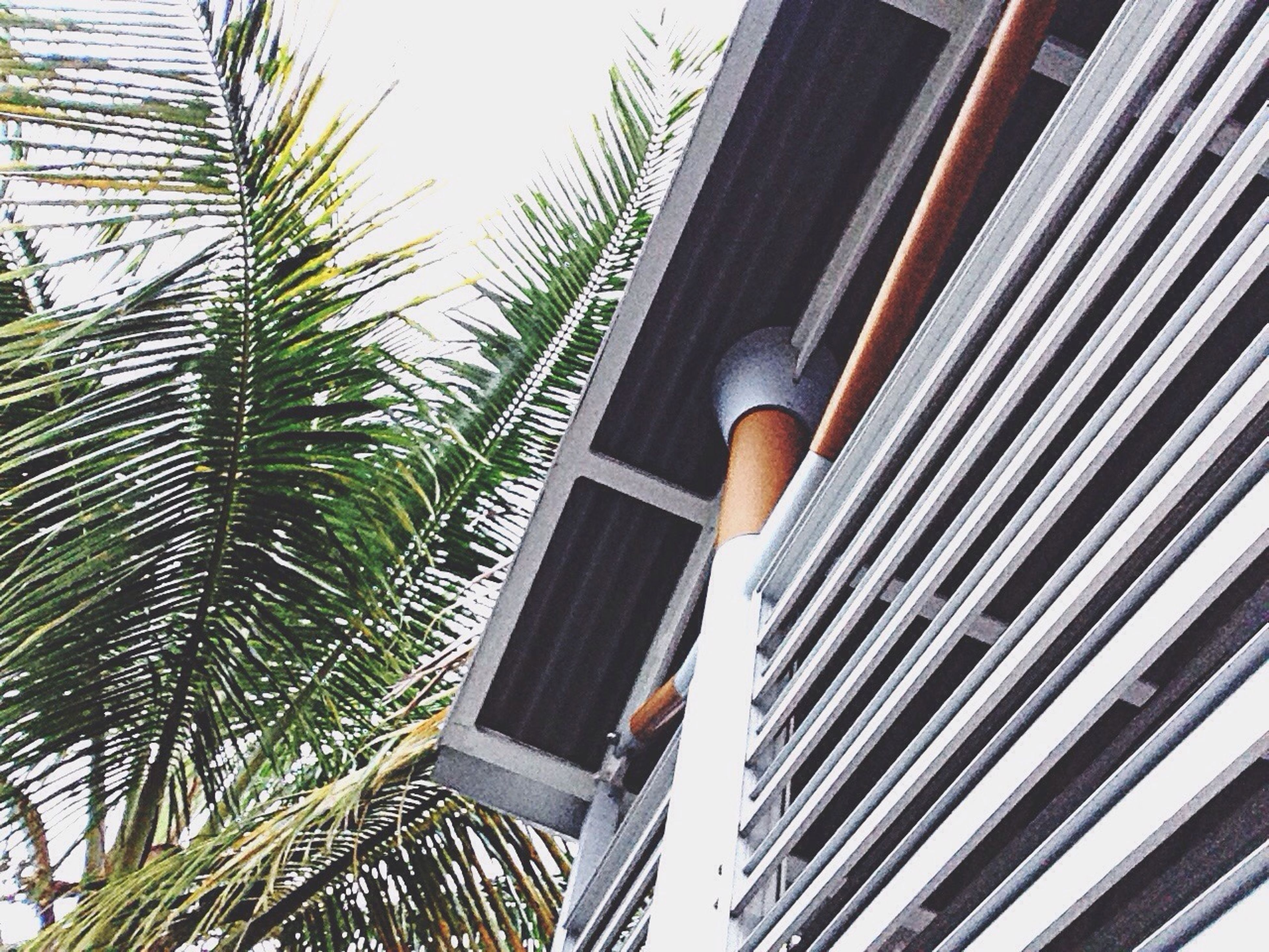 low angle view, palm tree, tree, clear sky, growth, built structure, day, architecture, building exterior, outdoors, palm leaf, railing, nature, sunlight, sky, steps, leisure activity, plant