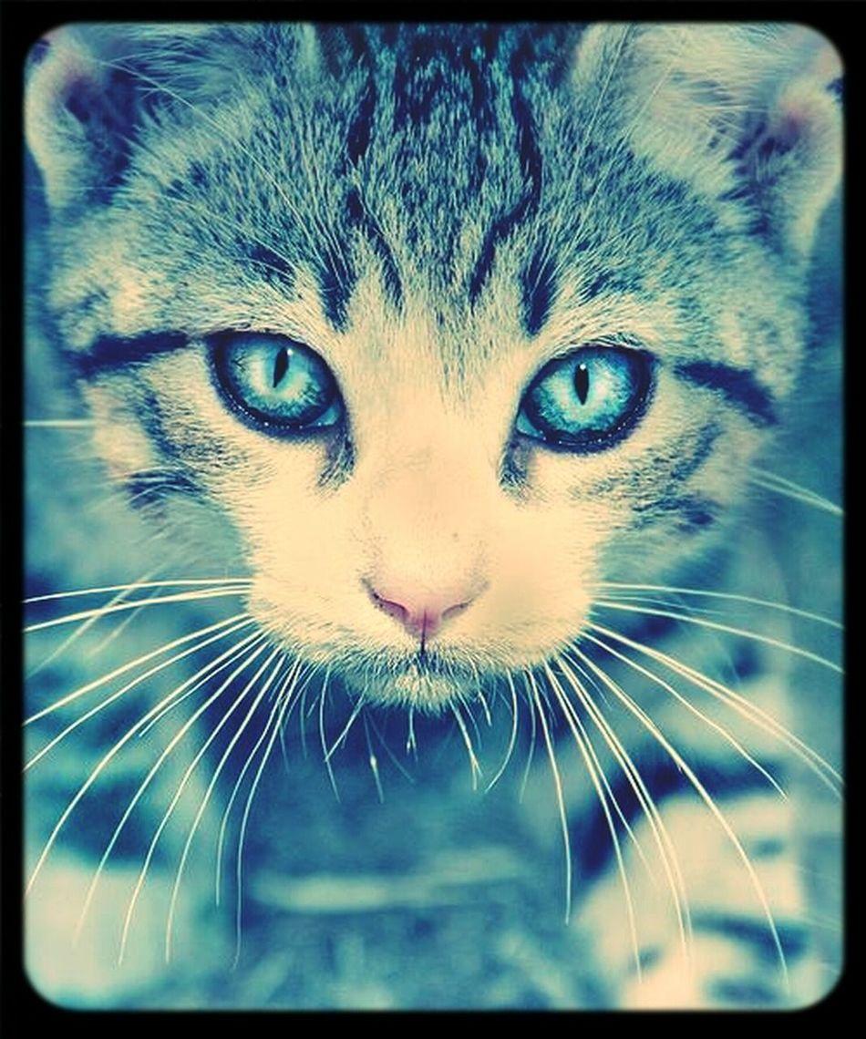 Cute <3 First Eyeem Photo